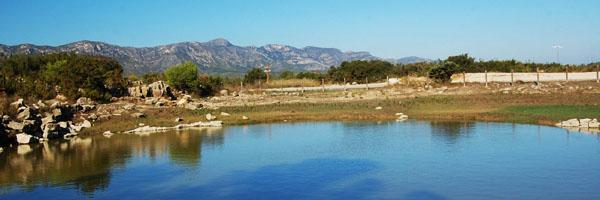 la bassa d'en Ferrà